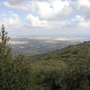 Huile d'olive de Sitia AOP - Nutricreta