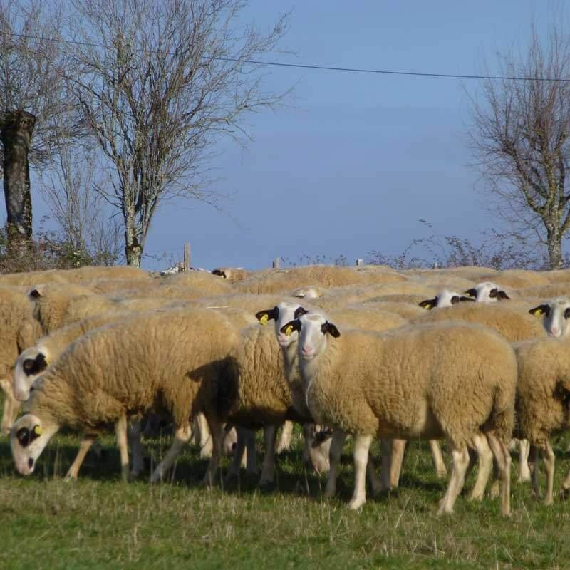 Agneau fermier du Quercy