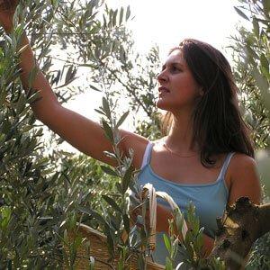Olive de Lucques L'Oulibo